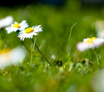 skora-wiosna